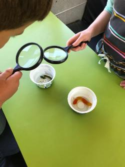 Living or Nonliving Worm STEM Experiment with Kindergarten at Coles Ferry